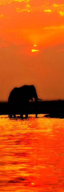 Sunset in Chobe National Park, Botswana. Get the best of Botswana culture, travel, art and food, check out; bit.ly/CultureTripBotswana