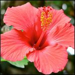 Tropical and indoor plants available from North Park Nursery and Garden Center…
