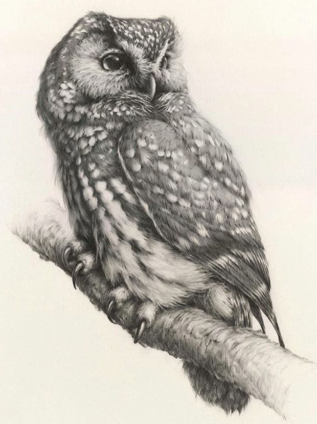 Скетч для тату с совой, сидящей на ветке | Нарисовать сову ...
