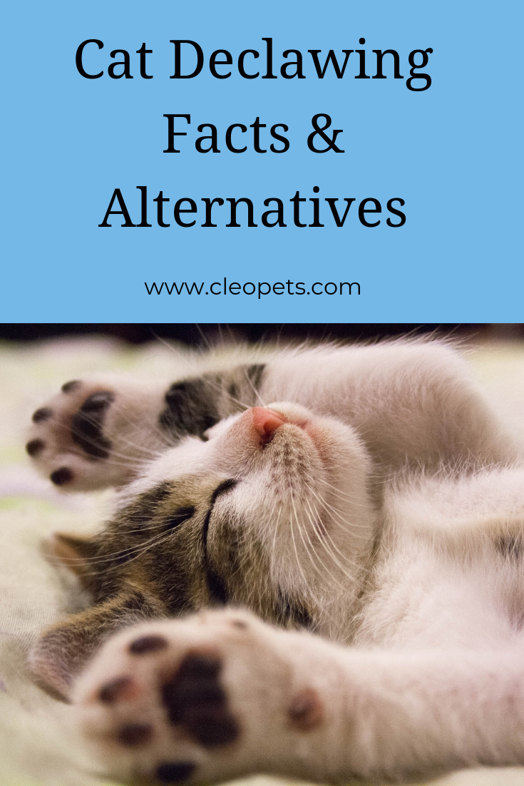 Cat Declawing What are the Alternatives? Cat facts