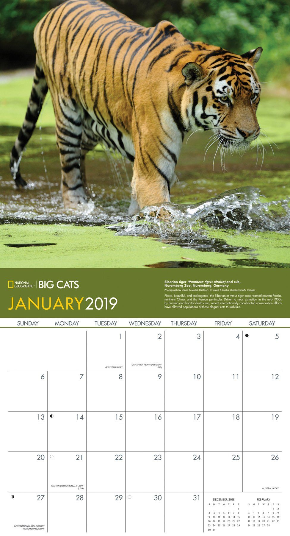 National Geographic Big Cats 2019 Wall Calendar Calendar