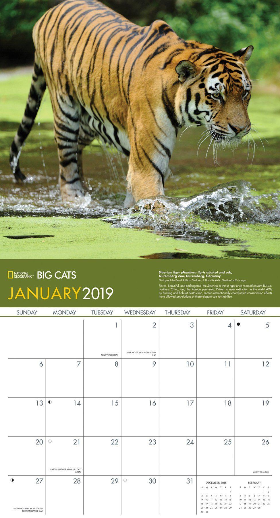 National Geographic Big Cats 2019 Wall Calendar Calendar