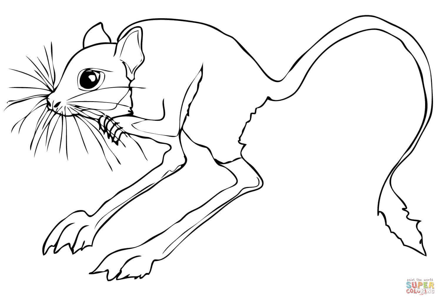 Desert Animals Coloring Pages | Desert Rodent Jerboa Coloring Page |  SuperColoring.com