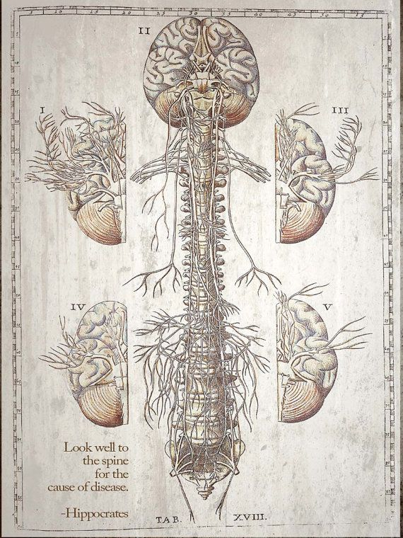 Look to the Spine Chiropractic Anatomy Artwork di ClinicArtwork ...