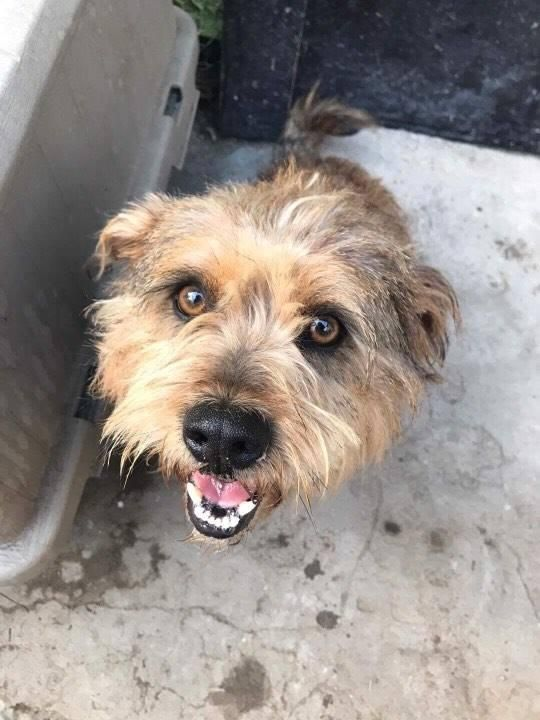Adopt Tommy Pickles On Tommy Pickles Terrier Mix Dogs Cairn