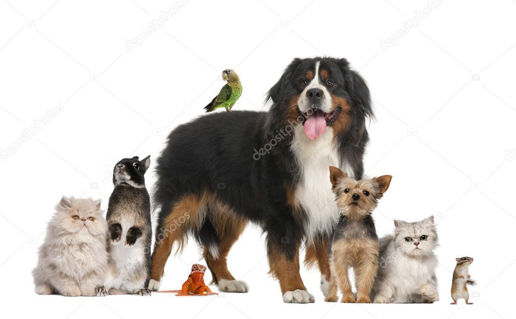 Group Of Pets Stock Photo Sponsored Pets Group Photo Stock Ad Pets Animals Emotional Support Animal