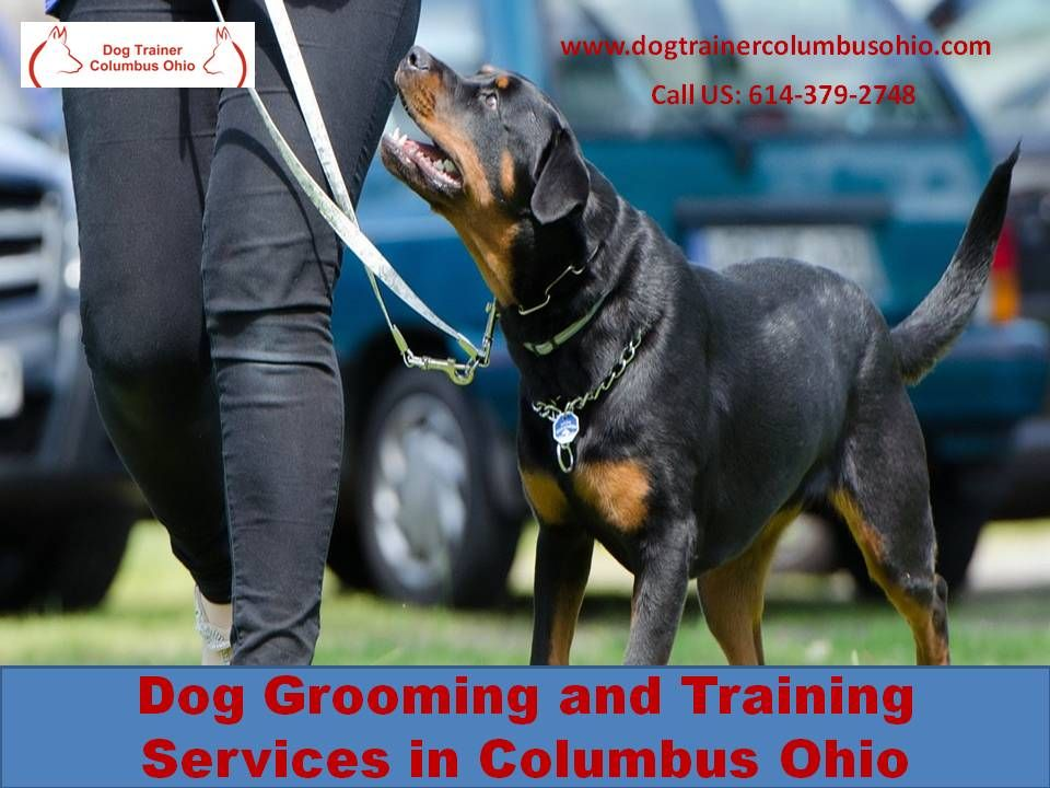 For Professional Dog Grooming And Training Services In Columbus
