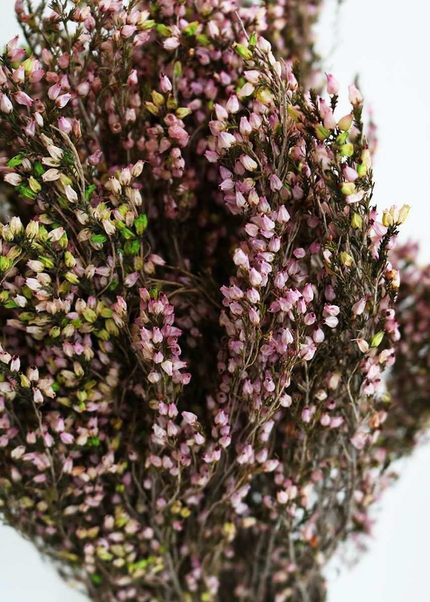 Pink Heather Preserved Flowers How To Preserve Flowers Heather Flower Dried Flowers