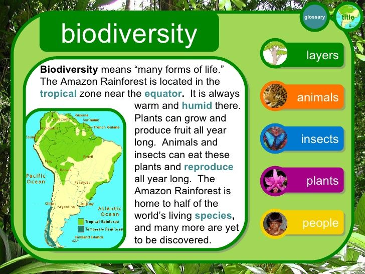 Forest Biodiversity Threats Facts Google Search Tropical Zone