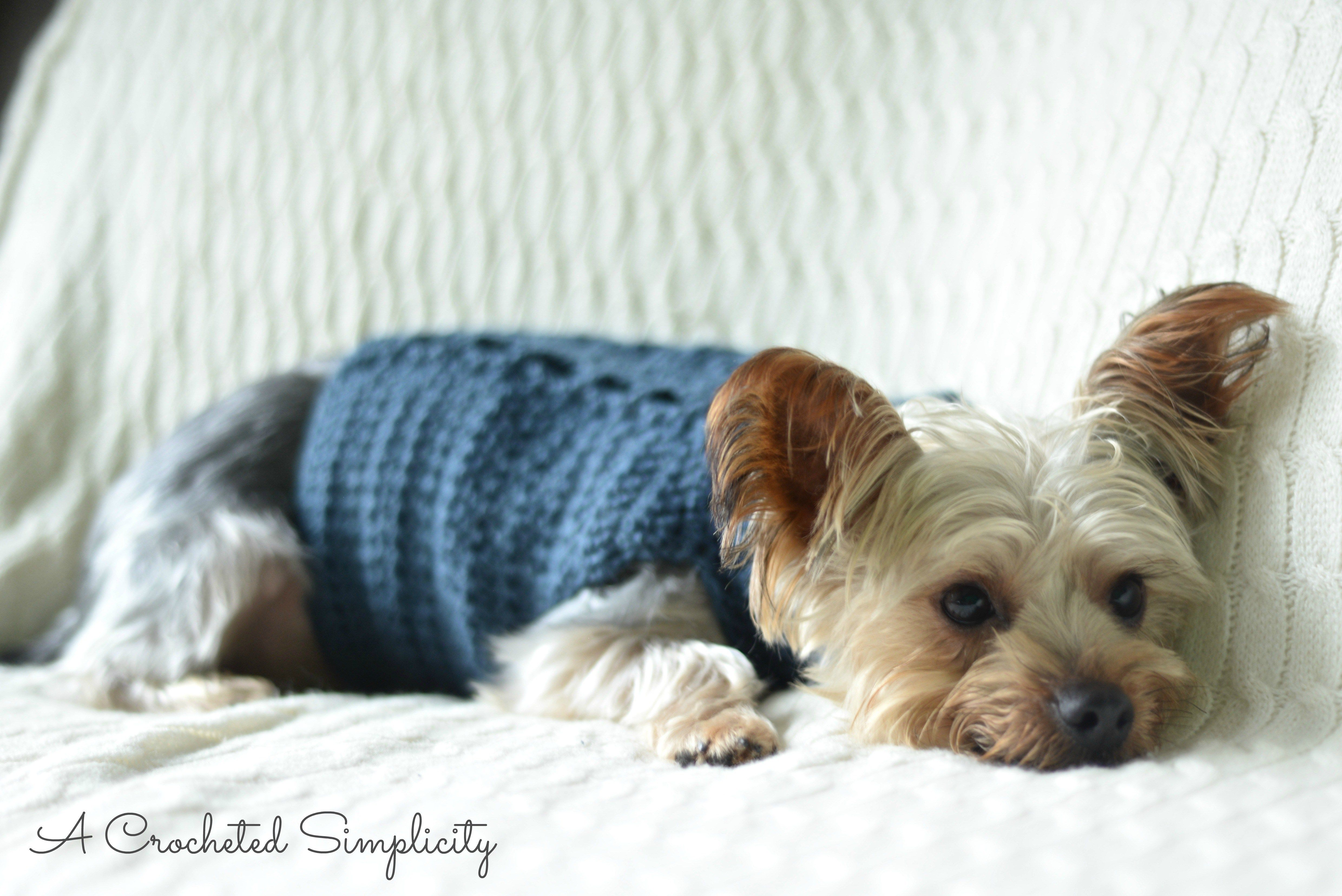 Free Charity Crochet Pattern: Cabled Dog Sweater | Pinterest