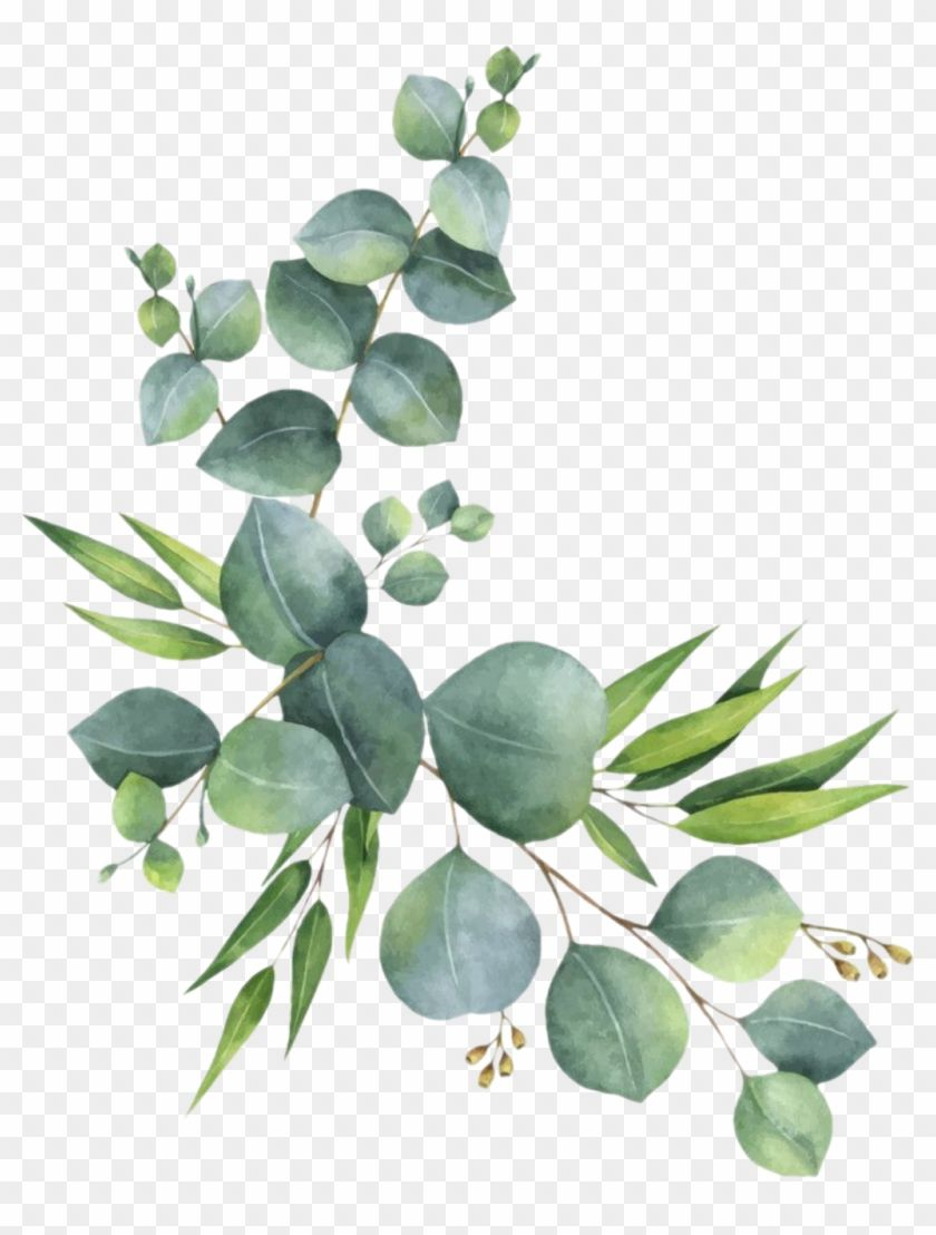 Find Hd Branch Leaves Florals Branches Zweig Watercolor Eucalyptus Clipart Hd Png Download To Search Flower Png Images Leaf Drawing Floral Watercolor