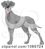 Clipart Cute Blue Great Dane Dog Standing Royalty Free Vector