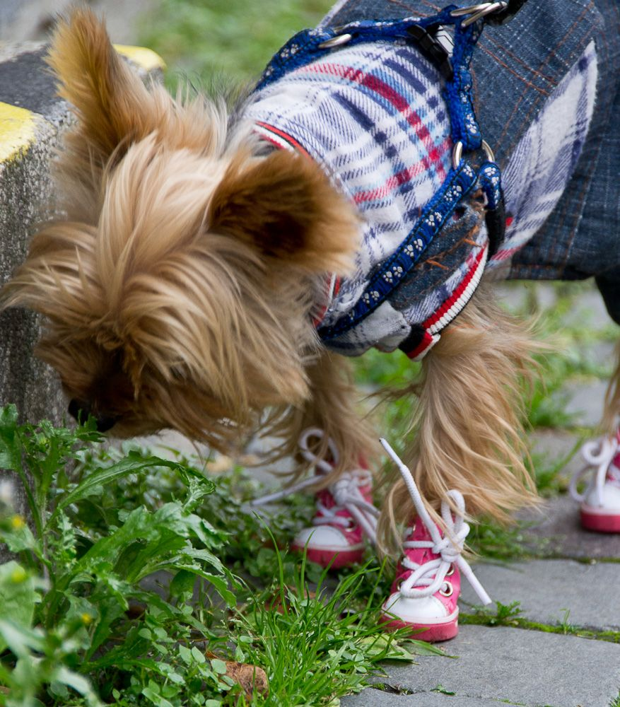 shoes for dogs?... yes it works :)