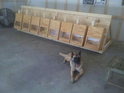 Scent Boxes Nose Work Dogs Nose Work Dog Equipment