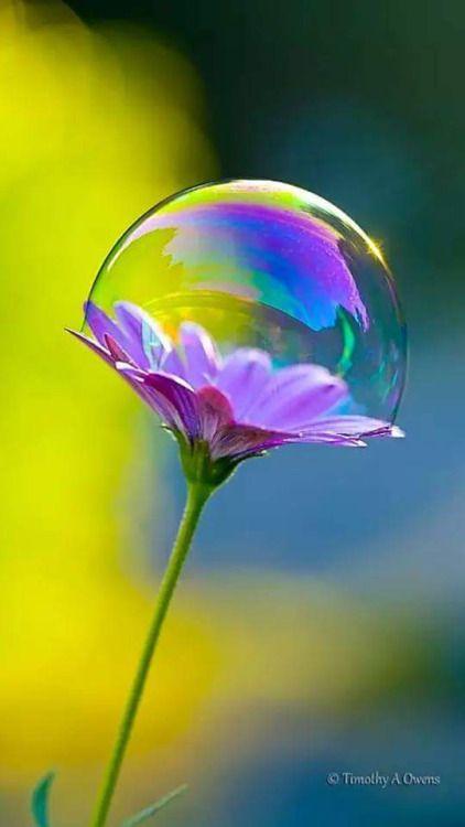 Bolha de sabão na flor