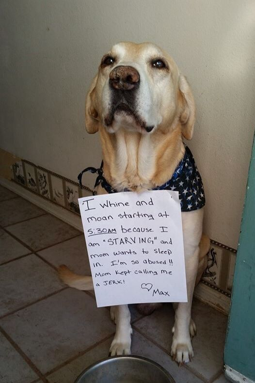 I Shamed My Own Pup I Love My Maximus Funny Dog Signs Dog