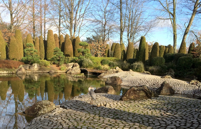 Japanese Garden In The Park Rheinaue Bonn Germany North Rhine Westphalia Rhine River