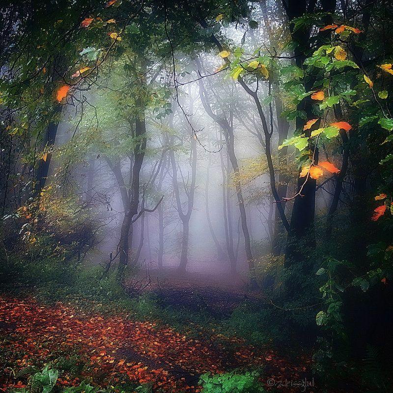Autumn Wood by Weissglut on DeviantArt