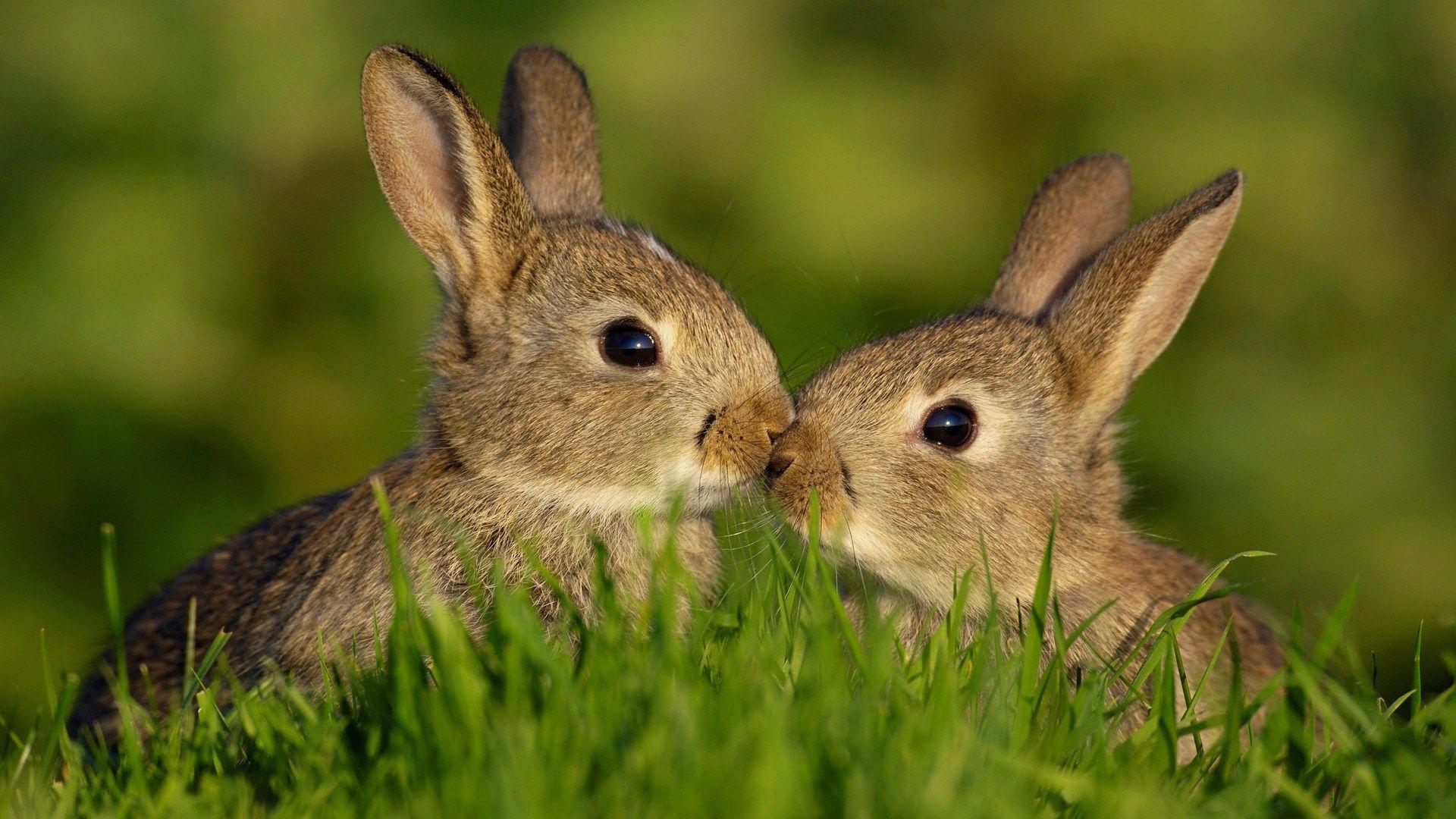 2017-03-23 - rabbit wallpaper full hd, #1419212 | sharovarka