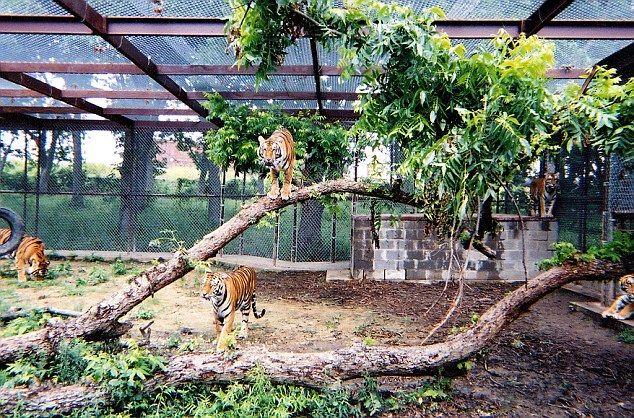 Catios Tigios Cat Fence Outdoor Cat Enclosure