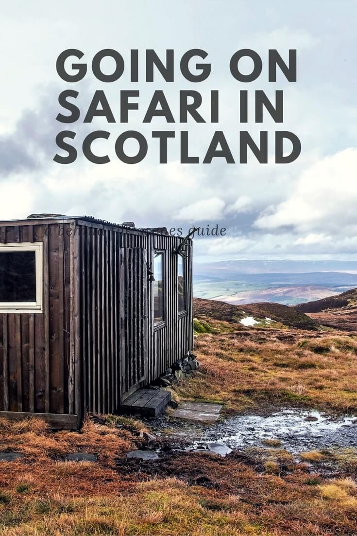 How to go on Safari in Scotland