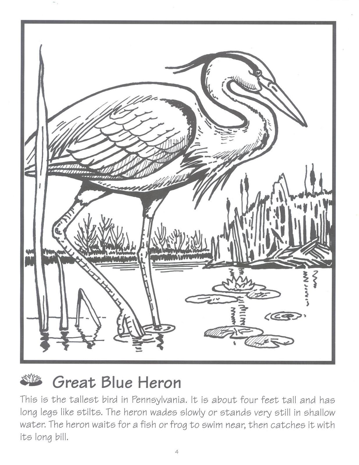 Blue Heron Coloring Page Urban Threads And Blue He Bird Coloring