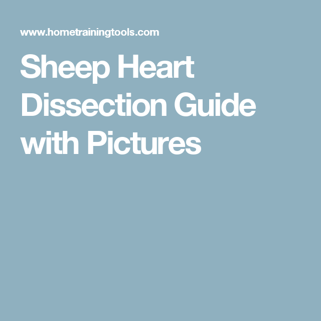 Sheep Heart Dissection Guide with Pictures | Pinterest | Teaching ...