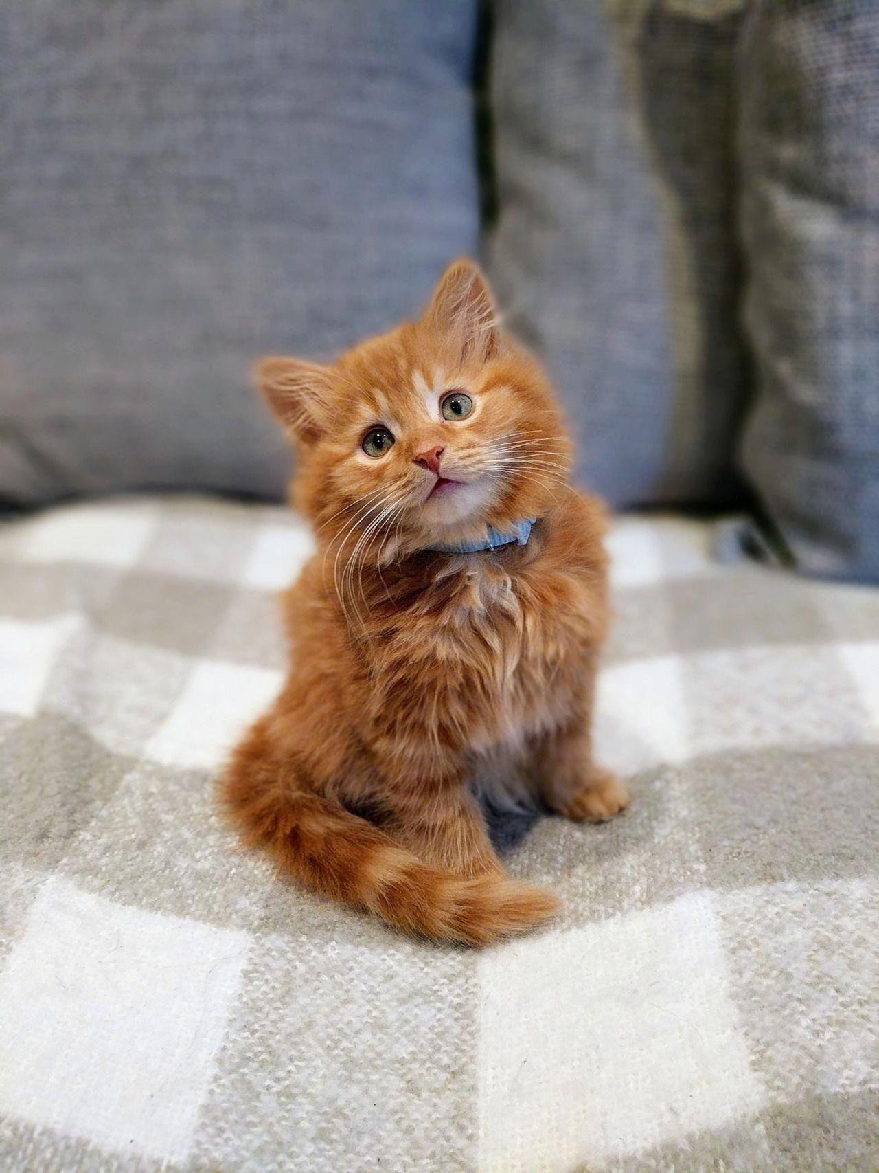 Little Kitty Cat Is Beyond Cute Cute Cats Cute Animals Cute Cats And Kittens