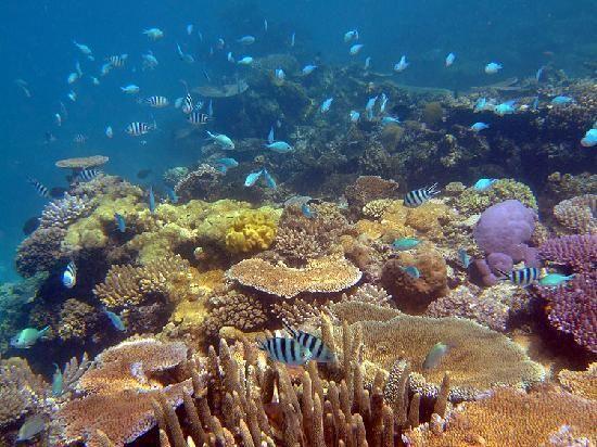 Navini Island Resort Fiji Snorkeling In 2019 Island Resort Fiji Island