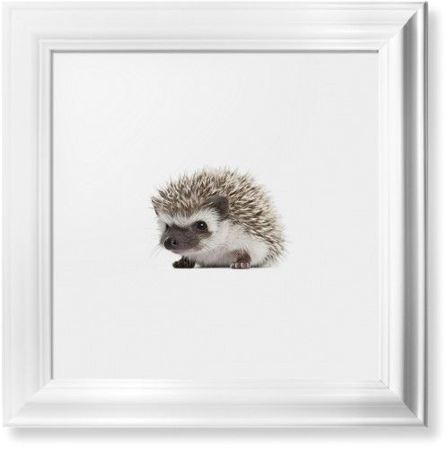 Baby Hedgehog Framed Print, White, Classic, White, White, Single piece, 12 x 12 inches