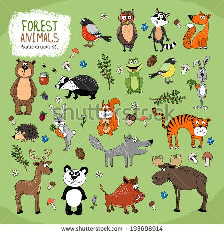 Forest Animals Large Set Hand Drawn Illustration With A Wolf Fox Bears Panda Owl Raccoon Tiger Bunny Hedgehog Moose Deer Warthog Badger Squirrel Frog And