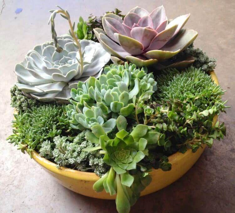 Diy Succulent Planter Ideas Everyone Can Try Morflora Indoor
