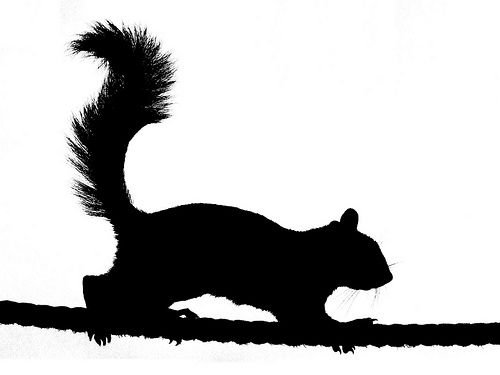 Christmas Silhouettes Squirrel - Google Zoeken