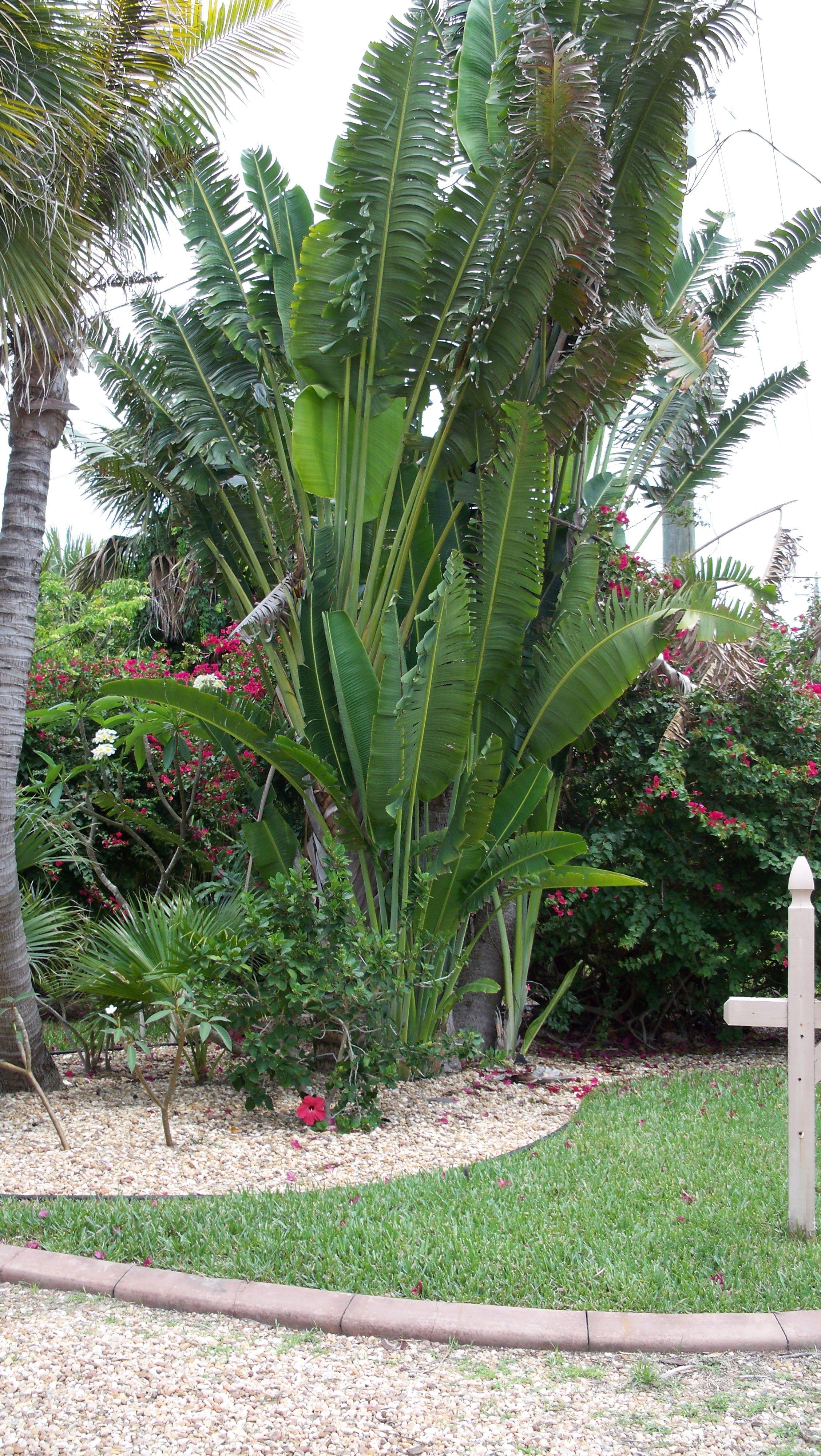 white bird of paradise. tropical