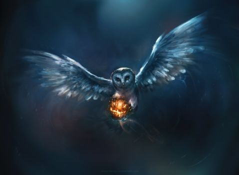 Cute Owl Wallsfield Com Free Hd Wallpapers Owl Wallpaper Cute Owls Wallpaper Owl Background