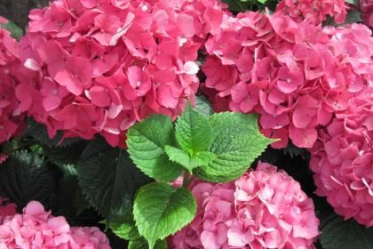 a-flowers_mid_summer_56-1536217.jpg (420×280)