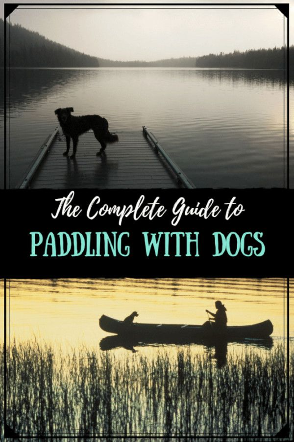 Photo of The Complete Guide to Canoeing and Kayaking with Dogs