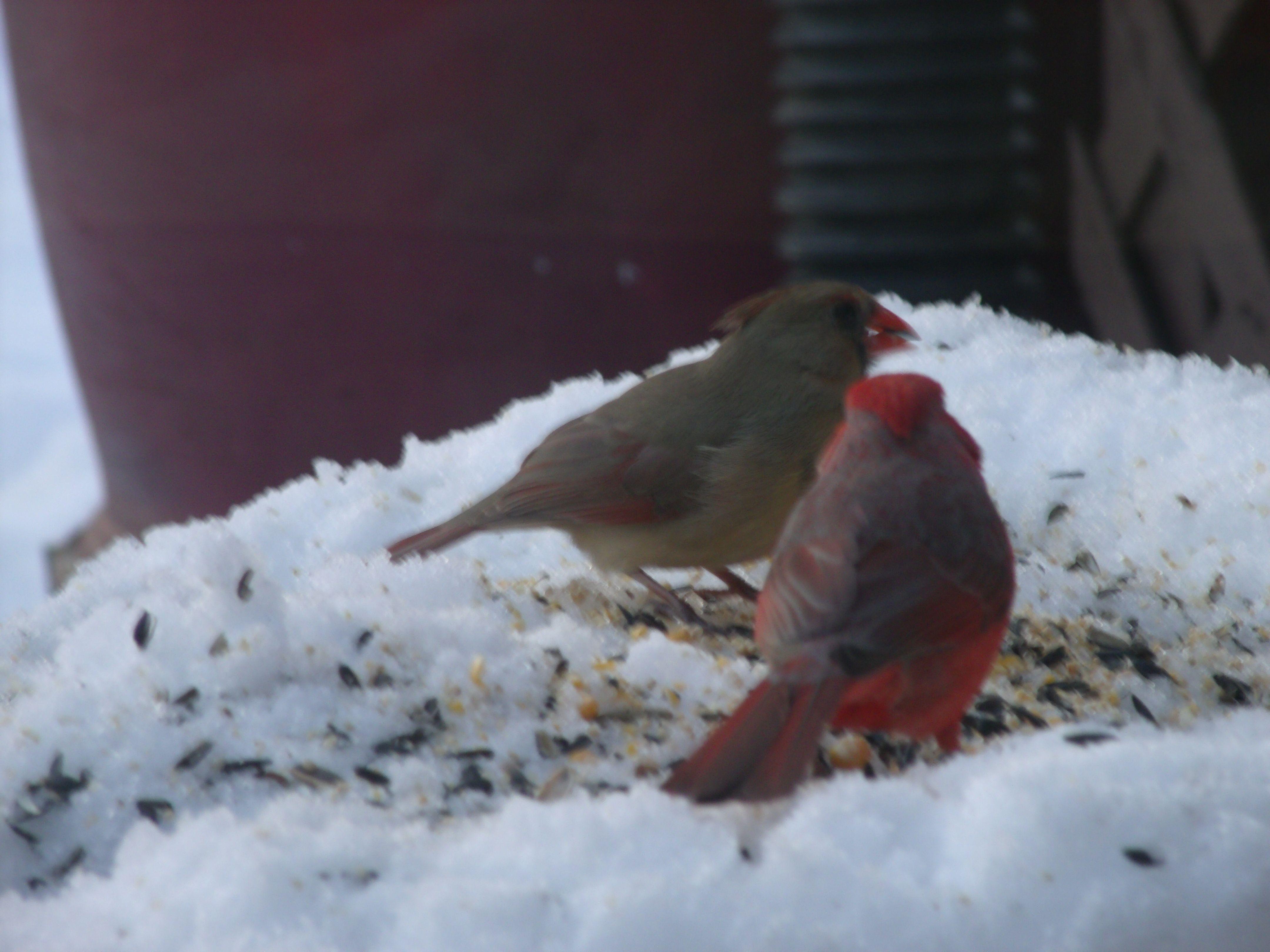 Cardinals