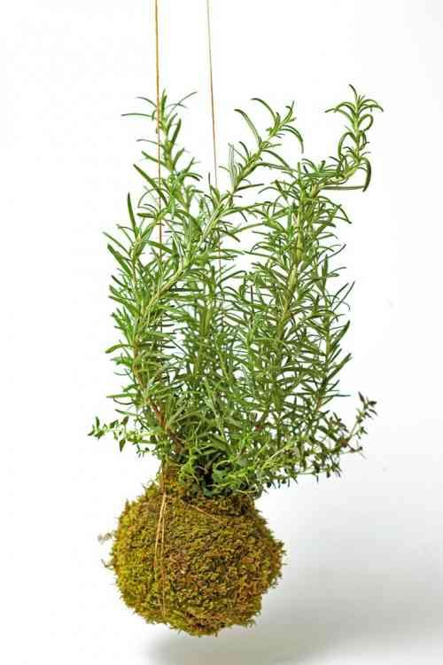 jardin avec herbes fraiches pour maison avec kokedama