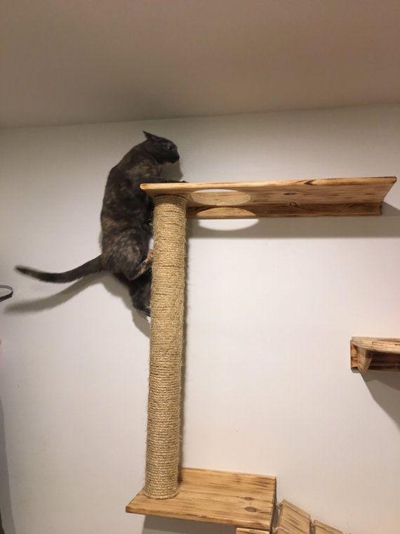 cat climber n cat shelves - Cat Climber