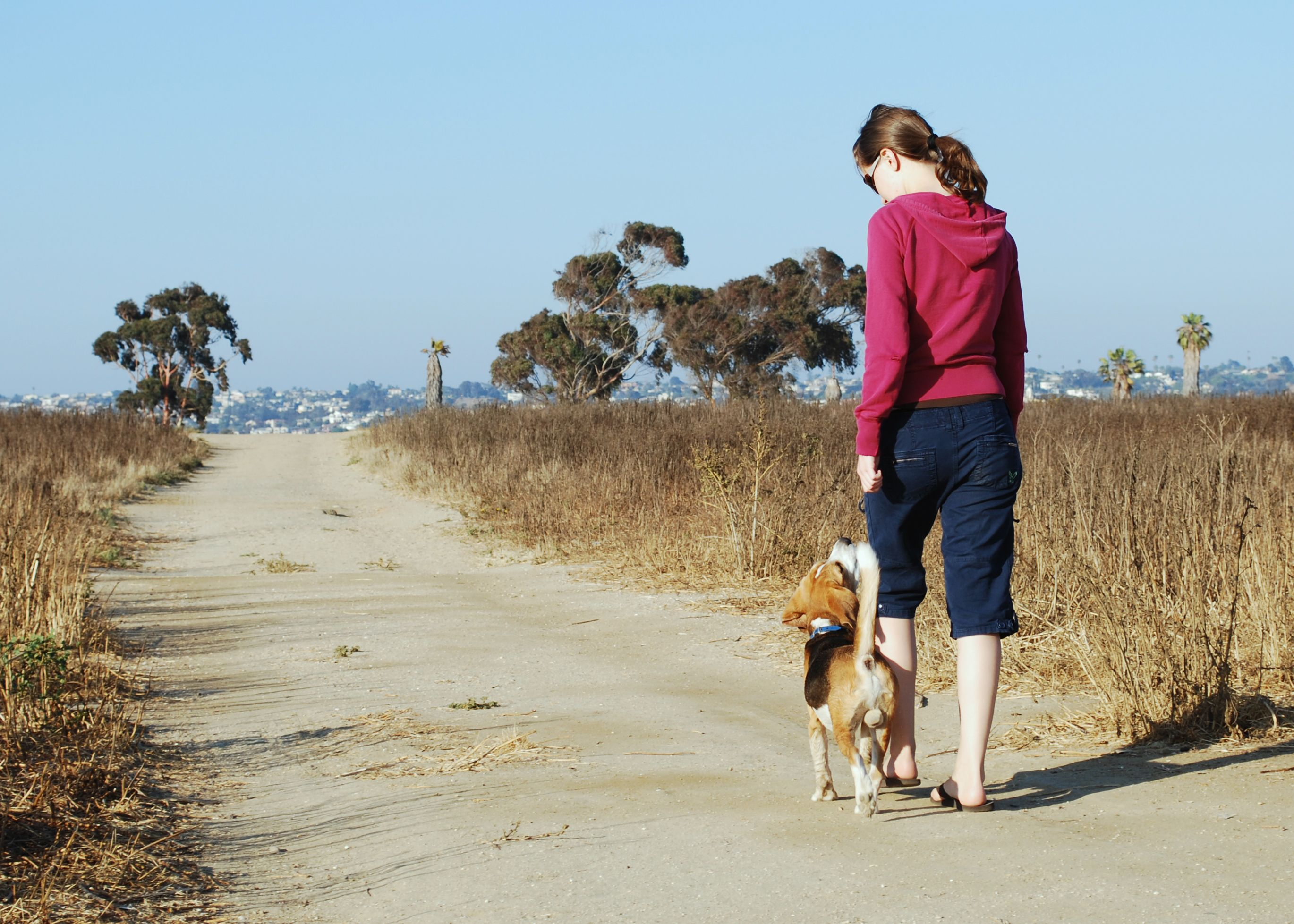 how to teach your dog to heel off leash