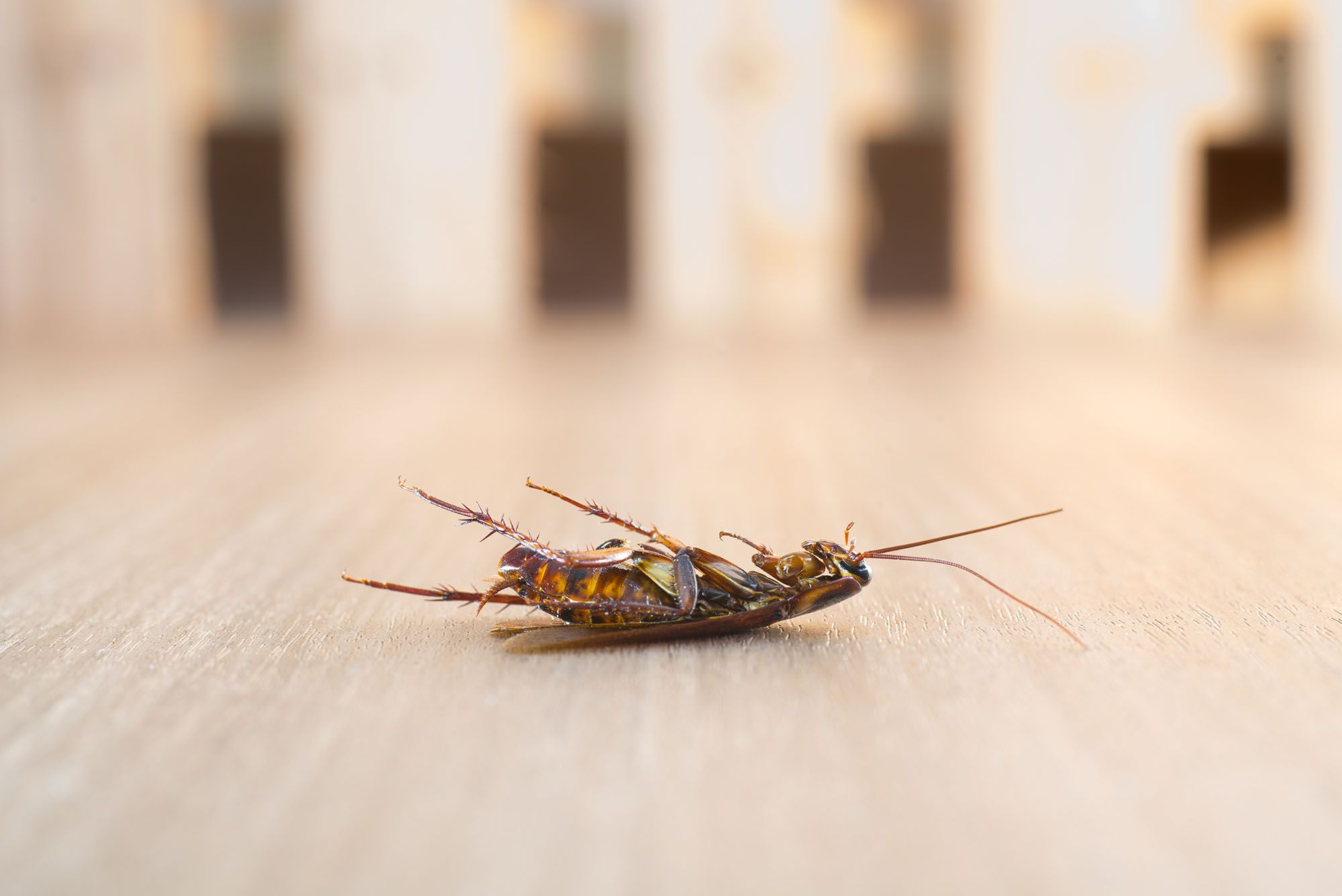 8 natural ways to get rid of cockroaches Cockroaches