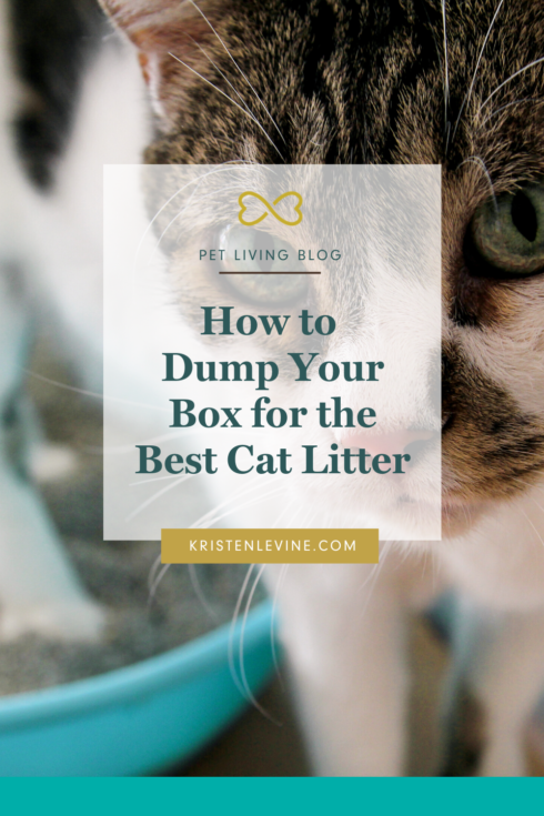 How To Dump Your Box For The Best Cat Litter Best Cat Litter Male Cat Spraying Cat Pee Smell