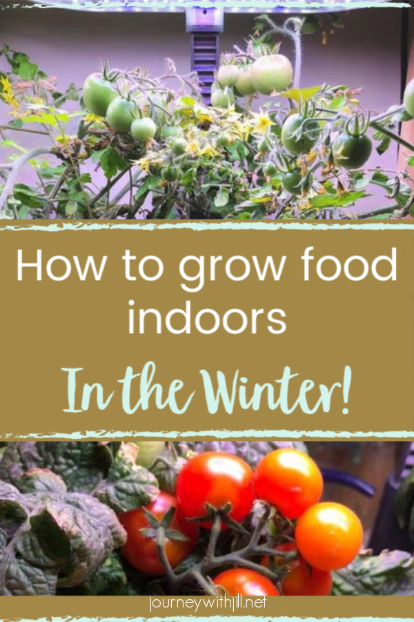 How to Grow Food Indoors in the Winter - The Beginner's Garden