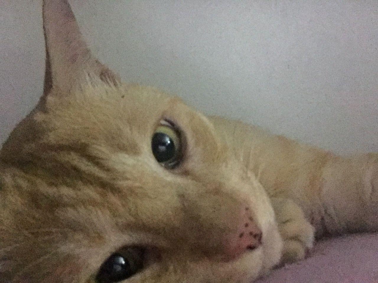 ฝนตกออกไปเท ยวไม ได นอนตาใสแจ วเช ยว ส นวลแมวหล อ