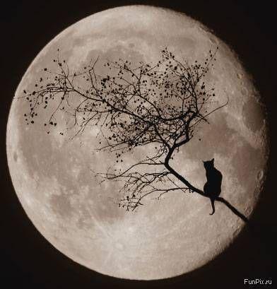 Happy Halloween Moon Tree