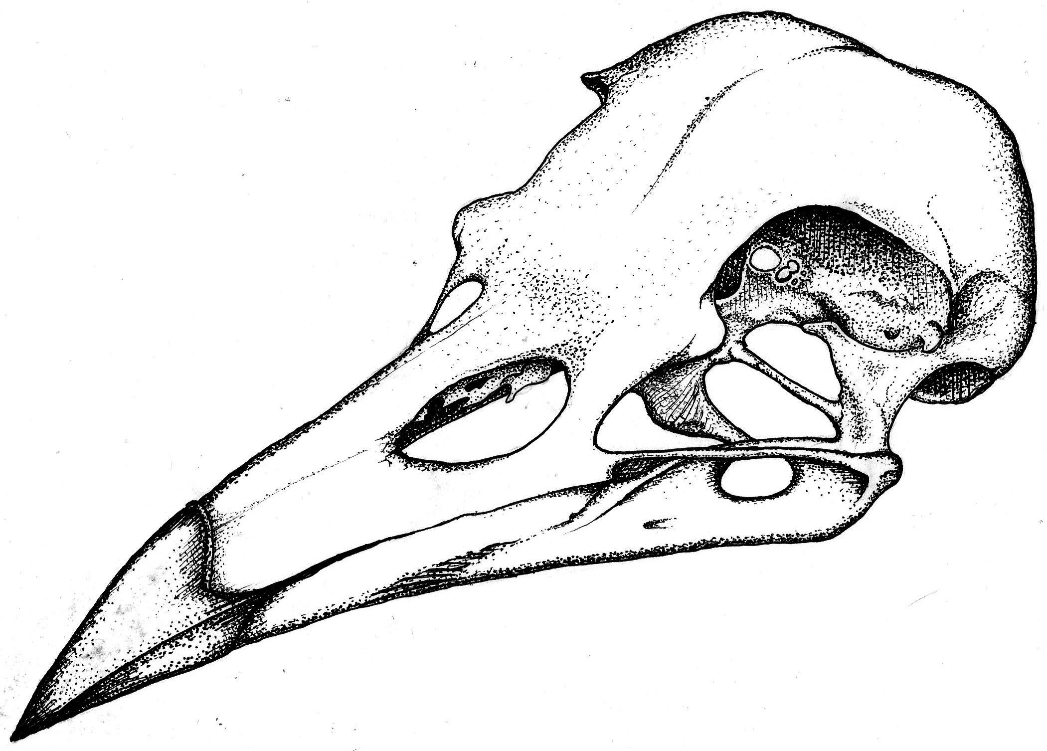 how to draw a crow head