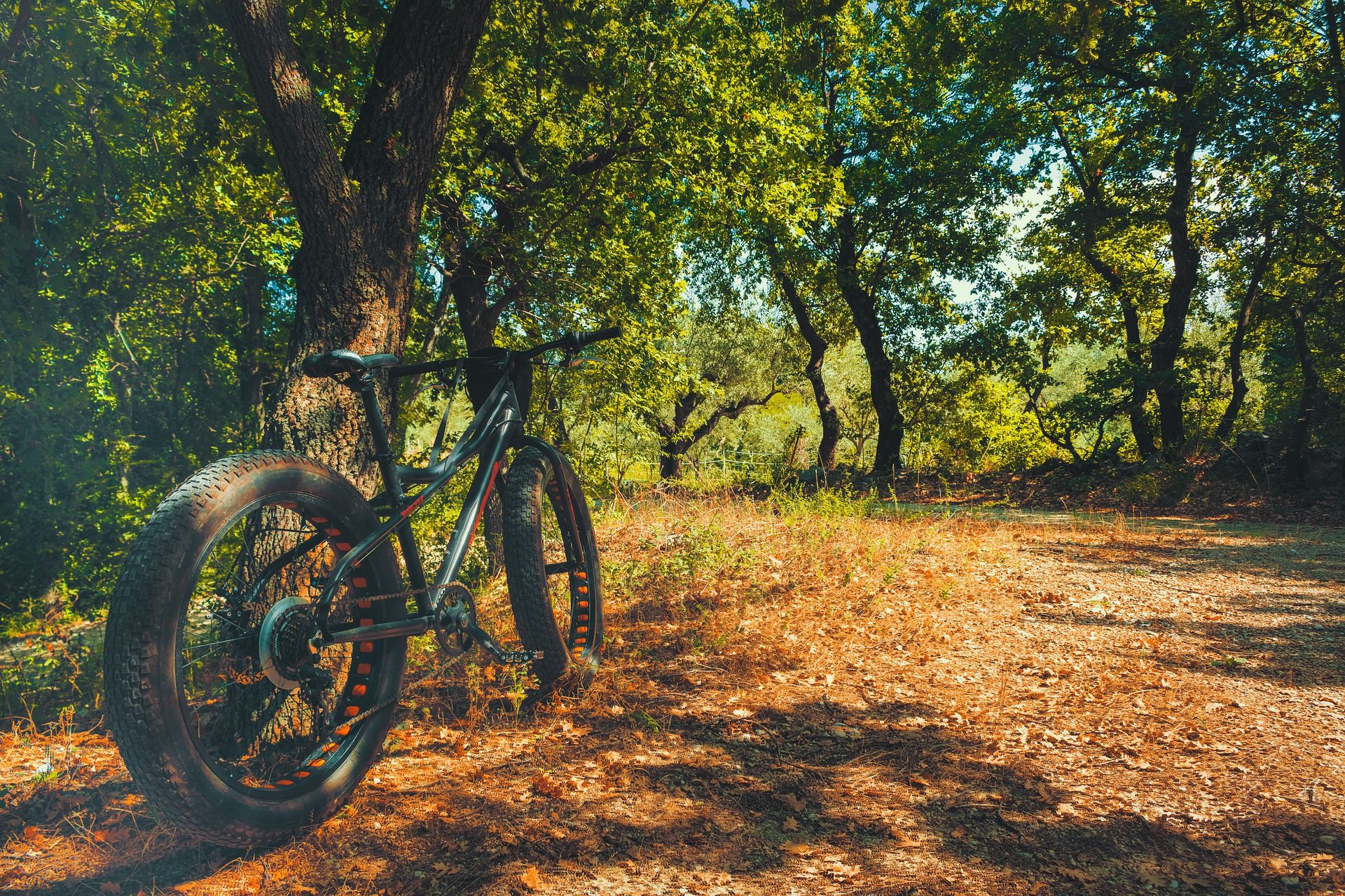 Pin On Top 10 Best Fat Bike Tires In 2020 Reviews