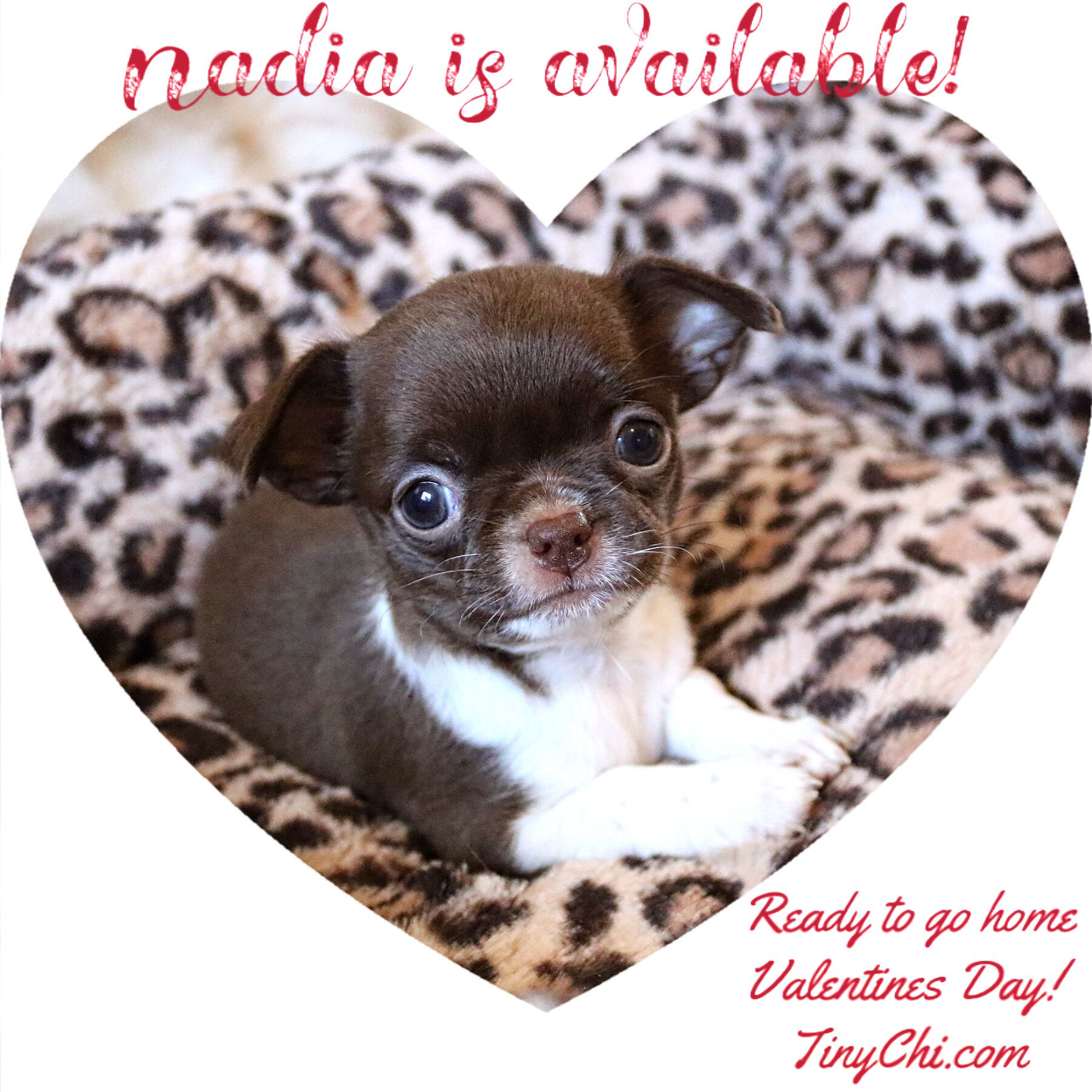 Nadia Is Available And Will Be Ready For Her New Home On