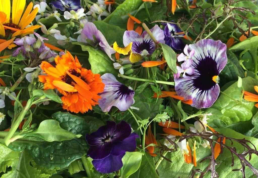 Edible flowers for winter salads. http://maddocksfarmorganics.co.uk/latest-blog/edible-flowers-winter-weddings/